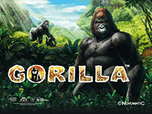 Аппарат Gorilla онлайн в казино Вулкан