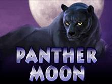 Играть бесплатно в Panther Moon