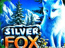 Бесплатно на Вулкан: Silver Fox
